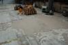 Rekonstrukce podlahových ploch